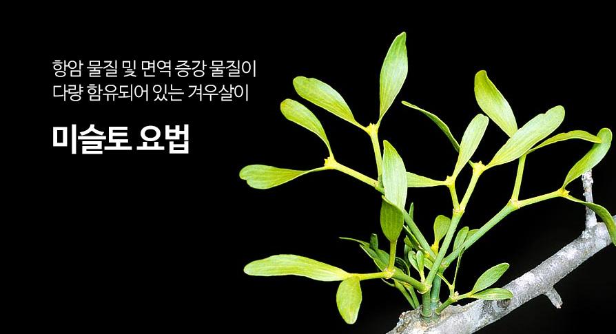 미슬토(압노바)요법 소개